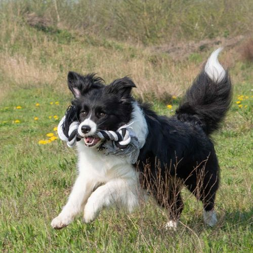 Floss toy